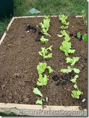 carrot&lettuce